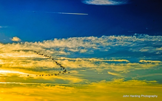 Atlantic Flyway Blogged January 3, 2014