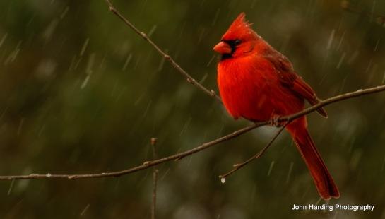 birds.013.1.14.edited_edited-1