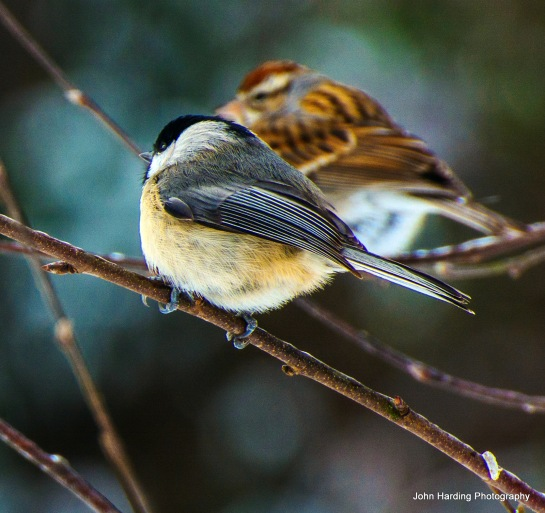 birds.026.1.14.edited