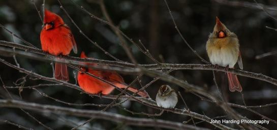 birds.059.1.14.edited_edited-1