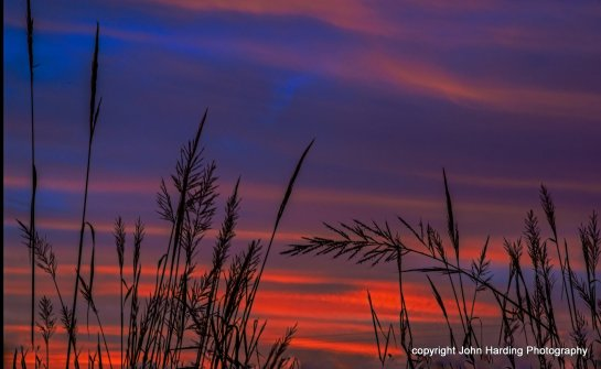 Reeds at dawn Posted to flickr September 26, 2015